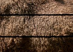 North American Texture (ggppix) Tags: bisonbison american bison bronxzoo newyork nyc bronx texture buffalo