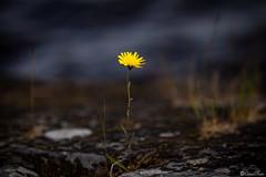 AY6A3175 (fcruse) Tags: sweden sverige cruse sommar naturephotography värmland 2019 travelphotography glafsfjorden glava naturfoto vanlife resefoto canonmarkiv crusefoto vwt5