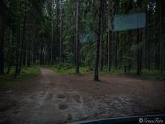 IMG_2593 (fcruse) Tags: cruse sommar 2019 naturfoto vã¤rmland crusefoto iphonexs sweden sverige naturephotography värmland travelphotography glafsfjorden glava vanlife resefoto vwt5