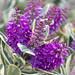 Bandon Flowers
