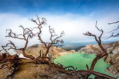 Monster Tree II Acid Lake Mt Ijen-Indonesia. (CK NG (choookia)) Tags: monstertree acidlake mtijen indonesia poison eastjava eastjawa tree lake dangerous sonya7rii sonyfe1635mmf4