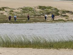 Hikers, Abbotts Lagoon, Pt Reyes 41421n (Al Greening) Tags: abbottslagoon ptreyes california hiker
