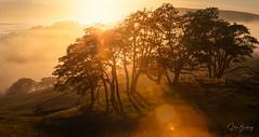 Bald Hills (sberkley123) Tags: california trees sunset usa fog forest oak nikon hiking redwoods 80200mm d850 redwoodsstatepark ngc flickrsbest