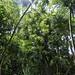 KaipapauGulch061919-2186crop copy