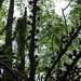 KaipapauGulch061919-2174crop copy