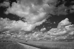 Cloudscape Monochrome (Notley Hawkins) Tags: june httpwwwnotleyhawakinscom notleyhawkinsphotography notley notleyhawkins 10thavenue missouri sky clouds cloudysky land farmland bucolic rural landscape farm farmfield tiltshift horizon callawaycountymissouri 2019 monochrome blackwhite blackandwhite road gravelroad tse50mmf28lmacro kingdomcitymissouri wheat wheatfield
