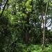 KaipapauGulch061919-2182crop copy