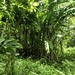 KaipapauGulch061919-2175crop copy