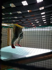 Climbing down (quinn.anya) Tags: eliza toddler feet legs ymca kindergym climbing