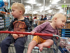 Younger kids in the cart (quinn.anya) Tags: costco paul eliza toddler preschooler cart brother sister curious siblings