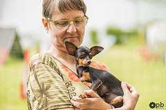 Tamara et sa petite crevette (Oracle) (Philippe Bélaz) Tags: pragois ratierdeprague tamara animauxdecompagnie chiens feu noir rencontres vert été événement