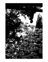 (Brendan | Toews) Tags: leica leicam7 leica90mmf4elmarc 90mm kodak trix trix400 film grain bw blackandwhite vancouver