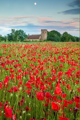 St James' Church and Poppies (Julian Barker) Tags: swarkestone derby derbyshire poppy poppies moon rising sunset pink glow holy faith rural landscape east midlands great britain england uk europe flora flowers wild canon dslr 5d mkii julian barker 2019 st james church grade ii listed building parish