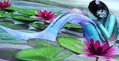 Water Lillies (LiangScorpio) Tags: mermaid poem sl secondlife fallengodsinc genus maitreya lorelei argrace anataya water lilly
