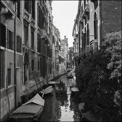 Venice (Koprek) Tags: rolleiflex28f film analog 6x6 120 venice italy ilfordhp5 streetphotography stphotographia stphotography street may 2019
