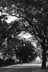 001135250012 (w21266rice) Tags: nikon fm10 film 底片 菲林 analog micronikkor 55mm f28 ilford xp2 super 400 c41黑白 blackandwhite blackwhite