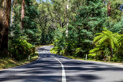 Shadowed Path (Jared Beaney) Tags: canon6d canon australia australian travel photography photographer victoria regional melbourne yarraranges dandenongs mountain mountains hill hills blackspur drive road forest narbethong healesville