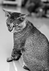 Google pixel 3 (dhinar.fitra) Tags: blackandwhite cat googlepixel3 bokeh depthoffield