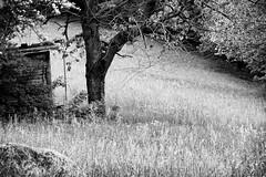 Tranquility (Mario Ottaviani Photography) Tags: sony sonyalpha travel viaggio adventure avventura nature natura scenic exploration esplorazione marioottaviani lombardia bergamo excursion escursione landscape paesaggio black white blackandwhite monochrome monocromo biancoenero tranquility tranquillità albero tree cabin hut capanna