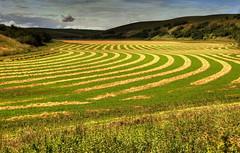 Palouse County, Washington, USA (klauslang99) Tags: klauslang agriculture palouse county washington fields harvest landscape pattern ngc