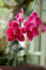 orchid (viktor.rpprt) Tags: szeged canona1 canonfd botanicgarden flower orchid film filmphotography filmisalive thefilmcommunity thefilmgang kodakfilm shootfilm shotonfilm grain ishootfilm vintagecamera analog