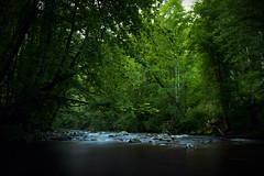 Alb (photoprofat) Tags: alb river forest woods water blackforest black schwarzwald wald deutschland germany