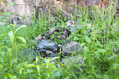 Source of life (Teemu Porola) Tags: grass hay water stone flowers rock green outside outdoor pond summer finland cliff yellow nature moss life