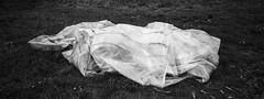 (Paysage du temps) Tags: 2019 20190428 clochemerle film france hp5 hasselblad hasselblad45mm ilford landscape paysage rhone vauxenbeaujolais xpan plastique plastic bache herbe grass
