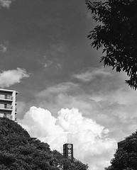 The Sky from Atsuta Shrine (Jon the 写真 Machine) Tags: instagram olympus omd em5markii em5ii em5mkii em5mk2 em5mark2 オリンパス mirrorless mirrorlesscamera microfourthirds micro43 m43 mft μft マイクロフォーサーズ ミラーレス darktable japan 日本 nihon nippon ジャパン ジパング japón जापान japão xapón asia アジア asian orient oriental aichi 愛知 愛知県 chubu chuubu 中部 中部地方 nagoya 名古屋 熱田神宮 blackandwhite bw bnw monochrome monochromatic grayscale greyscale colorless モノクロ モノクローム 白黒 黒白 空 sky clouds 雲