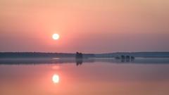 Lake Kiantajärvi sunrise (M.T.L Photography) Tags: lakekiantajärvi suomussalmi mikkoleinonencom sunrise night summernight water lake bridge isle trees forest sun sunlight mist serene mtlphotography