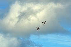 "2019 ""Wings & Wheels"" (Ian Macfadyen) Tags: wingswheels airdisplay aerobatics dunsfold helpforheroes warbirds aircraft flyingdisplay brooklandstrust charityevent raf royalairforce battleofbritainmemorialflight hurricane"