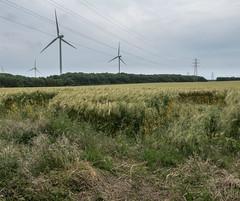 Wheat (harrytaylor6) Tags: sky clouds wind turbines pylons green blue ashington wheat yellow