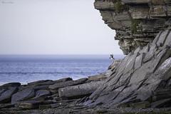 Low tide (Khurram Khan...) Tags: wildlife wildlifephotography wild wwwkhurramkhanphotocom khurramkhan shorebirds seaandshorebirds nikon nikkor iamnikon ilovenature ilovewildlife
