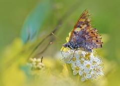 Маленькая жизнь (marussia1205) Tags: бабочка цветок крылья butterfly old age