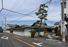 Pine Y (m-louis) Tags: 6713mm j5 nikon1 y字路 house japan kaizuka osaka pine street 大阪 家 日本 松 止まれ 貝塚 電柱