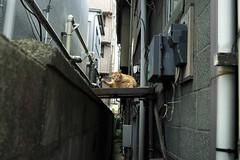 an urban cat (写真家 千葉和広 Photographer Kazuhiro CHIBA) Tags: 2019 saitama kawaguchi