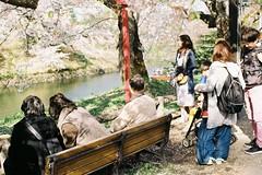 Addicted to sakura (しまむー) Tags: pentax mz3 fa 43mm f19 limited kodak gold 200 弘前城 桜祭り