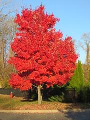 IMG_1094 (nicolaitan666) Tags: fall foliage port washington ny