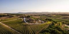 53868_94_falconry_02-848x425 (travel_expert) Tags: vineyard italy