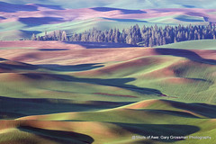 Good Day Palouse (Gary Grossman) Tags: palouse steptoe butte landscape hills dawn morning spring 2019 may northwest washington trees garygrossman garygrossmanphotography landscapephotography pacificnorthwest steptoebutte dawnpatrol earlymorning shotsofawe