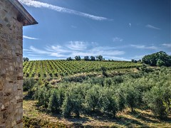 Vines and Olives! (JK-London) Tags: apple iphone iphone7 photomatrix hdr unreal landscape trees vines olives sky wine rural countryside quiet italy italia tuscany toscano villaasesta castelnuovoberardenga siena travel experience nature discover vivid hill
