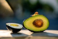 avocado (auntneecey) Tags: snail avocado tabletop 365the2019edition 3652019 day177365 26jun19 auntneecey texture 2lilowls