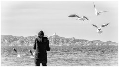 Pitance quotidienne (thierrybalint) Tags: marseille provencealpescôtedazur france mer sea mouettes plageduprado personne people nikoniste thierrybalint pitance pittance noiretblanc nb bw naturebynikon