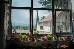 Windowsill (judepics) Tags: plants glass factory romania windowsill window avrig