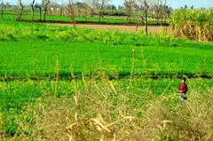 The Kid in the Fields (sanjay7butt) Tags: kid fields alone grass meadow field countryside