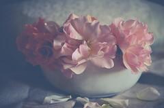 A touch of summer (Aránzazu Vel) Tags: summer verano estate rosa rose stilllife