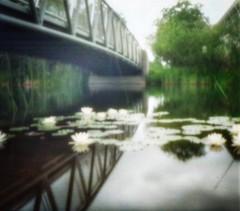 Unter der Brücke (Bilderstromer) Tags: analog 35mm münchen pinhole 135 brücke nopo haar seerosen film