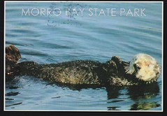 From hootnoodle (USA) (AunteyEm/MichelleW) Tags: postcards postcrossing postcardswithanimals otters morrobaystatepark california wildlife