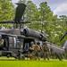 Military Working Dog Teams