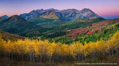 Swath of Color (David Swindler (ActionPhotoTours.com)) Tags: northernutah timpanogos utah wasatch aspen aspens autumn color colors fall mountains